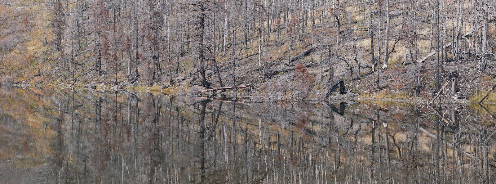 panoramic, landscape, montana, fire, wildfire, fall, autumn, reflection, lake, panoramique, photographie, photo