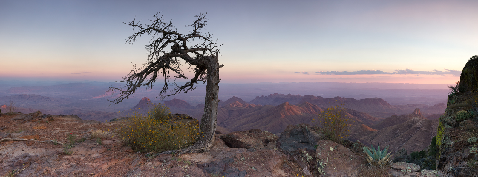 Panoramic, landscape, photography, sunset, Chisos, Big Bend, Texas, lone tree, panoramique, paysage, coucher de soleil